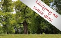 Zagłosuj na Europejskie Drzewo Roku 2017